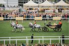 Royal Ascot Crown London Aspinalls